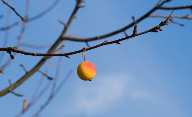 Сиротливое желтое и красное одичалое яблоко на чуть-чуть ветви на голубом небе. последнее яблоко осени перед зимой. осенний пейзаж