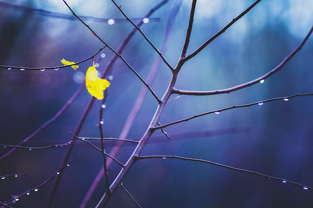 Lonely yellow leaf on wet branch of a tree on blue. rainy autumn day