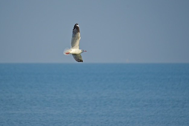 Lonesome gull spread their wings soaring into the sky over the ocean.