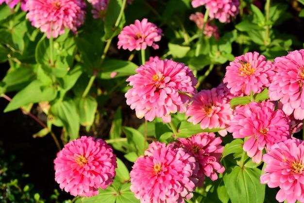 庭師は、long 9 parkの公園で花に水をまきます。