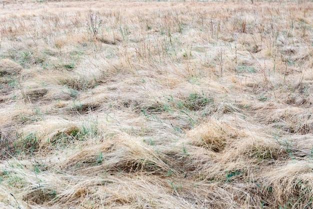 가지 치기 없이 모든 풍경에 길고 마른 잔디