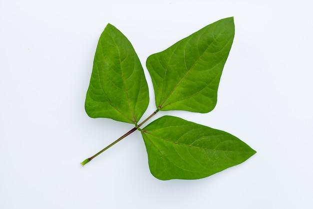 Лист длинных бобов, изолированные на белой поверхности