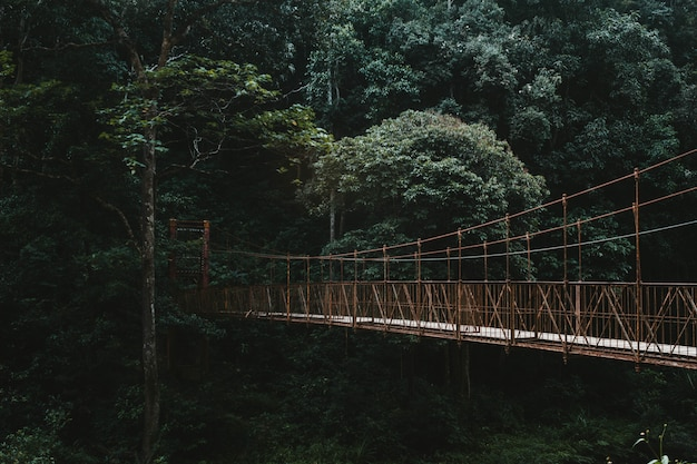 A long canopy walkway bridge in a forest