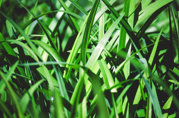 Long, contrasting lily leaves create a pattern as a background