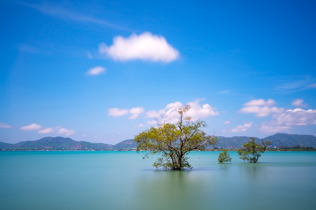 Long exposure image of mangrove trees in the sea at phuket island in summer season beautiful blue sky background at phuket thailand amazing nature view seascape.
