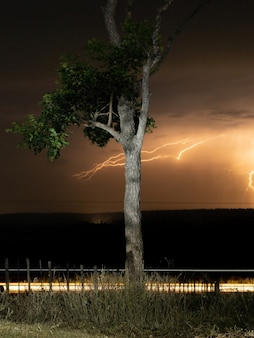 Long exposure of a tree by the side of a highway in the countryside, with fence, grasses, movement of leaves by the wind, selective focus on the tree with lightning in the background, at night