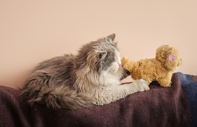 Long haired  cat with toy, kitten playing with toy