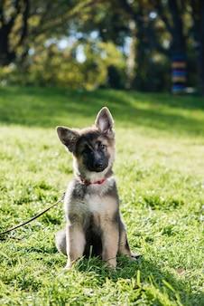 가죽 끈과 녹색 초원에서 장 발 강아지 애완 동물