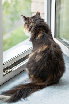 Long-haired three-color orange-black-and-white cat is sitting near window and looking out it. favorite pets. rear view, close up, copy space for text.