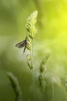 Длинное насекомое сидит на зеленом растении