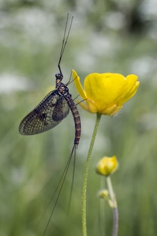 緑の植物に座っている長い昆虫
