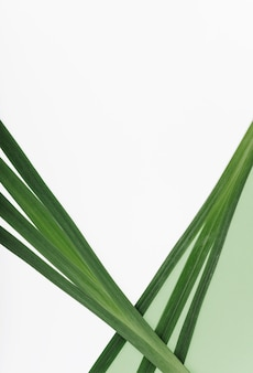 Long leaves of exotic plant