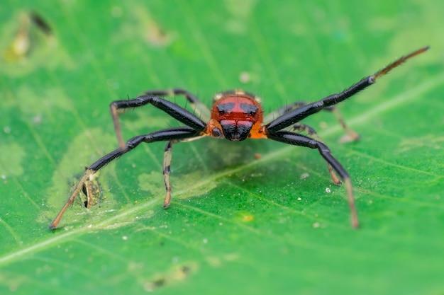 緑の葉に長い脚のクモ