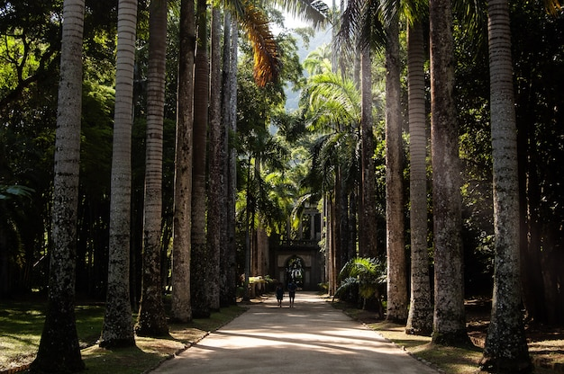 Long range shot of two people walking on a pathway in middle of coconut trees on a sunny day