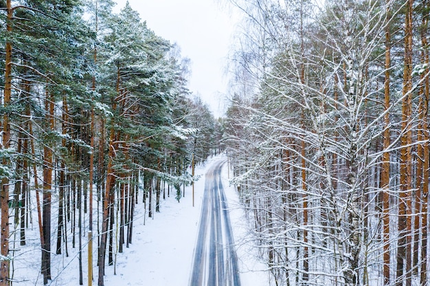 Long road surrounded by high trees covered in snow in wintertime Free Photo