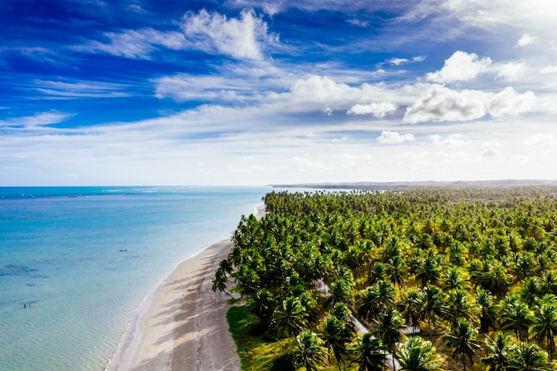 Long shot of a beautiful shoreline with white sand lined with coconut trees on a sunny day
