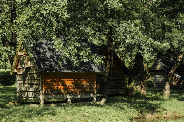 Long shot of farm sheds under trees