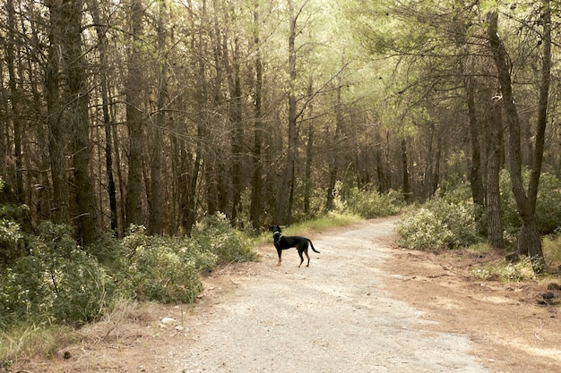 Long shot of a greek hound on a mountain dirt path in athens, greece