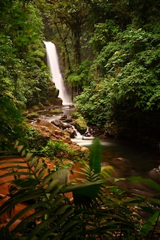 Long shot of a the majestic la paz waterfalls in the middle of a lush forest  in cinchona costa rica
