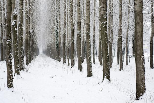 겨울 동안 숲에서 나무 사이 눈 덮인 골목의 긴 샷