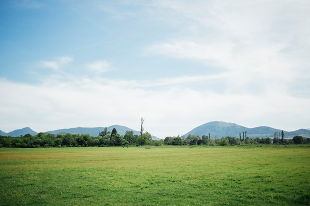 緑の牧草地のロングショット