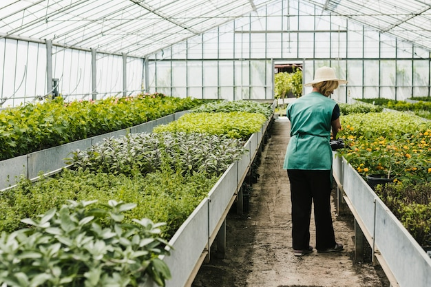 Long shot woman inside greenhouse