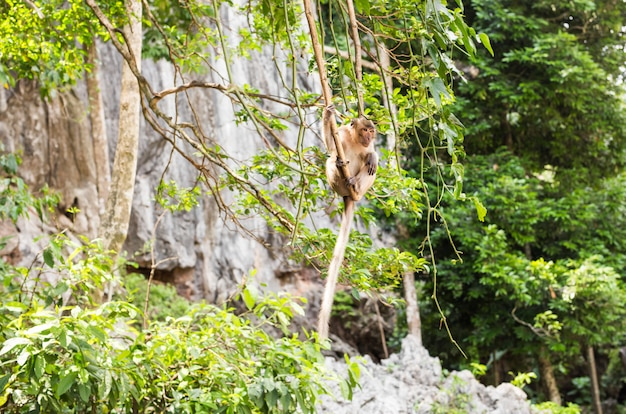 Long-tailed macaque monkey in the forest