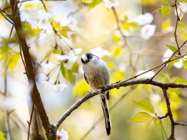 Codibugnolo appollaiato sul ramo di un albero