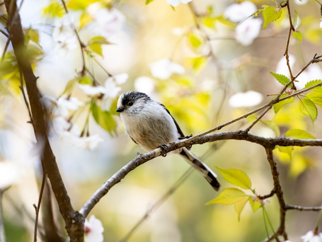 Long-tailed tit perched on a tree branch