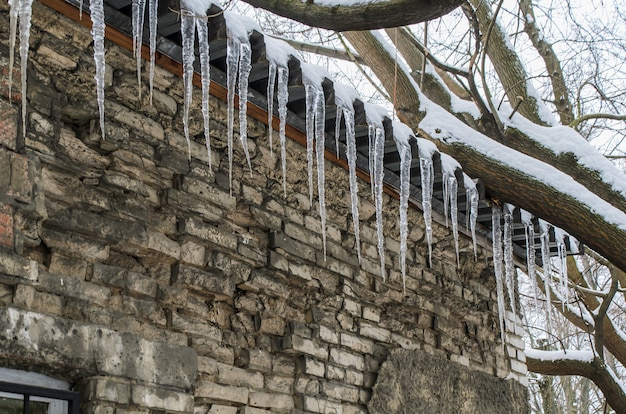 Long transparent icicles on cornice of old brick building, surrounded by snow-covered tree branches. consequences of thaw and frost. danger, risk of injury from falling icicles. old brick wall.