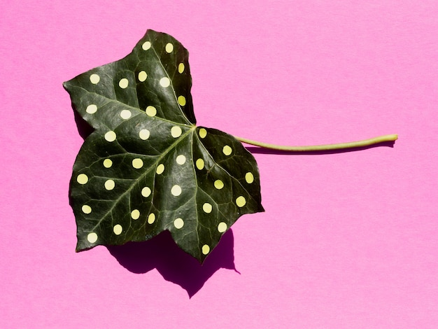 Long view painted leaf on pink background top view