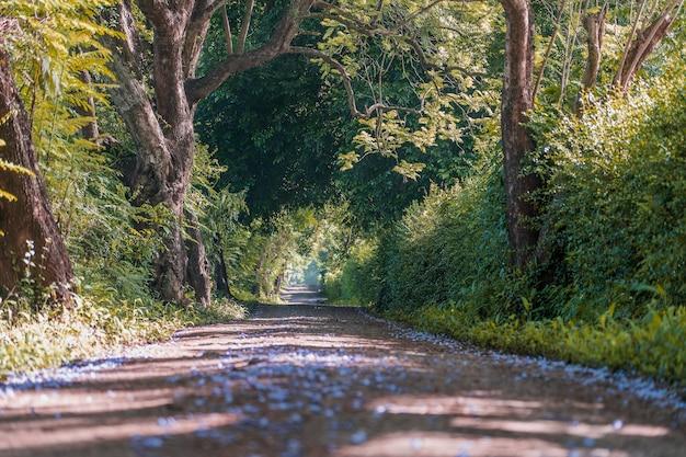木のトンネルの道のような大きな緑の木々の横にある長い道のり。タンザニア、東アフリカ。自然と旅行のコンセプト