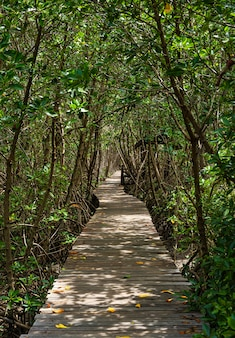 A long wooden pathway in mangrove forest