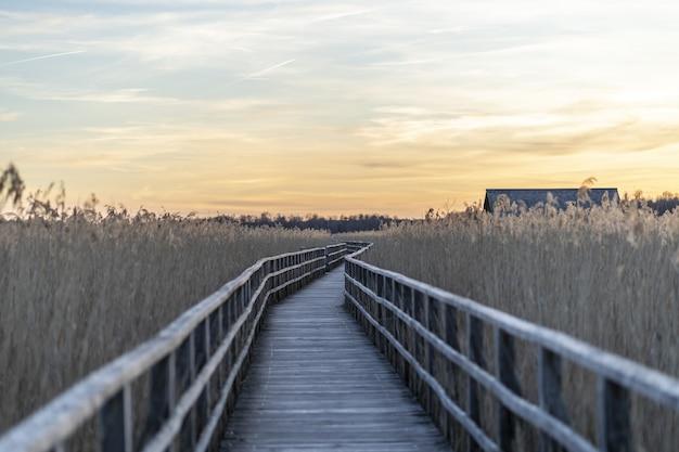 Длинный деревянный пирс в окружении травы во время заката
