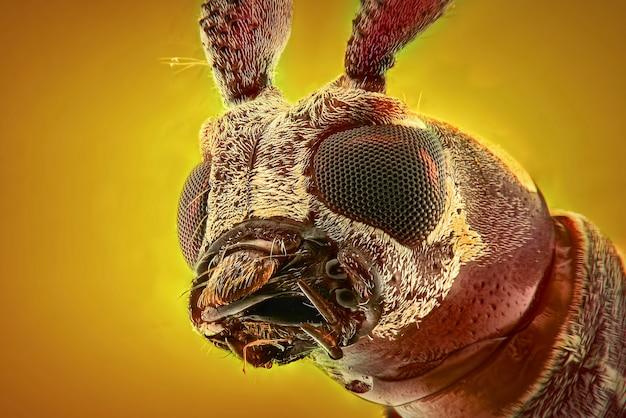 Longhorn жук лицо макро