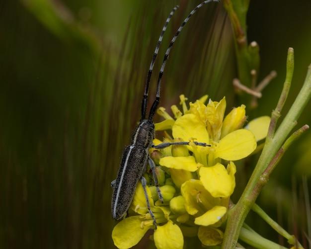 정원에서 노란 꽃에 롱혼 딱정벌레