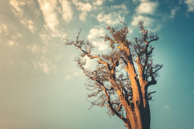 きれいな青い空の上のロンリーツリーは、旅行デザインのヴィンテージトーンの熱帯の休日の背景を表示します