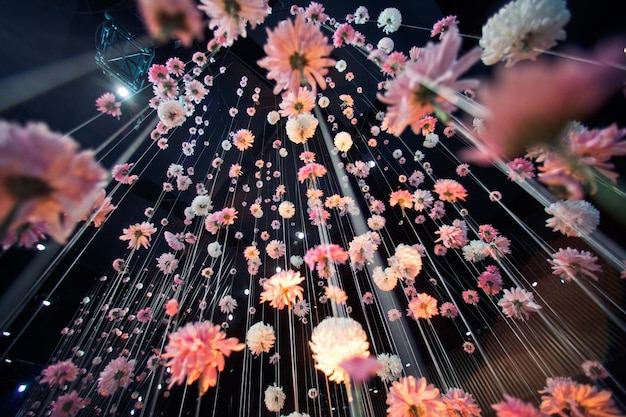 Look from below at pink chrysanthemums hanging from the black ceiling