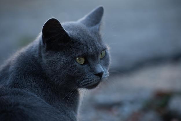 通りで猫の表情