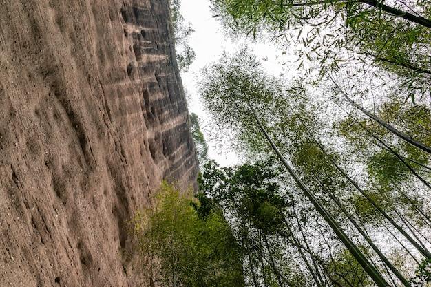 山の竹林を見上げる