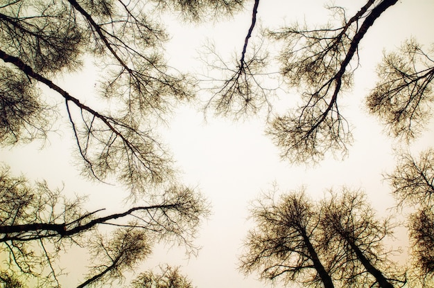 Look up to the tree and sky in sepia color