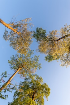Look up at the trees under the blue sky