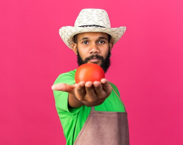 ピンクの壁に隔離されたカメラでトマトを差し出してガーデニングの帽子をかぶってカメラを探している若い庭師アフリカ系アメリカ人の男