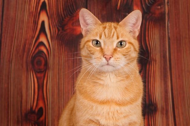木の壁に生姜猫を見て