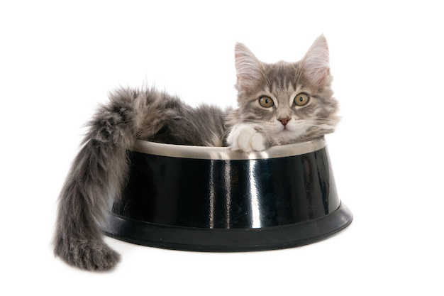 Looking ginger kitten in a dog's food bowl