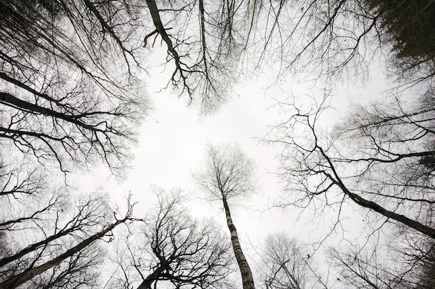 秋に森を見上げる。森の灰色の日の秋の風景