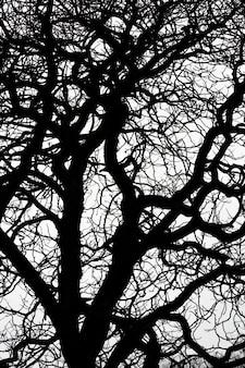 흰색에 잎이 없는 나뭇가지 실루엣을 올려다
