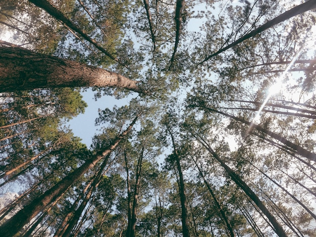 Looking up the sky through the forest canopy.