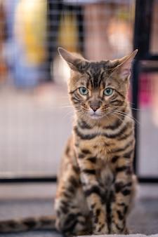 Lookingの中のかわいい猫