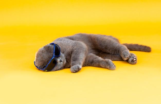 Вислоухий кот скоттиш-фолд в солнечных очках лежит на желтом фоне. студийное фото.